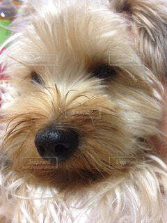 犬の写真・画像素材[65983]