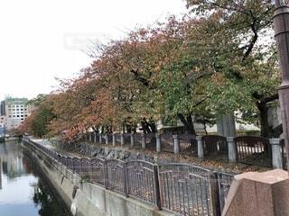 橋の上からの写真・画像素材[1602529]