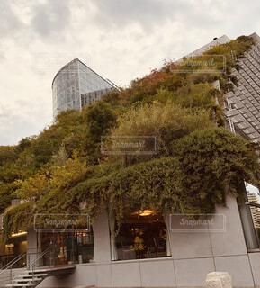 緑の建物の写真・画像素材[1606025]