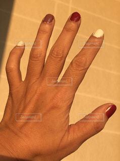 コスモス色の指の写真・画像素材[1629653]