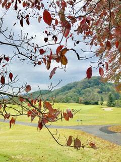 紅葉越しのゴルフコースの写真・画像素材[1596886]