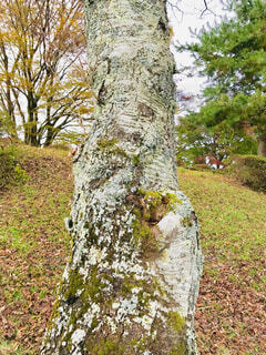 秋の公園の樹木の写真・画像素材[1613548]