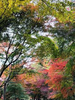 秋のグラデーションの写真・画像素材[1653860]