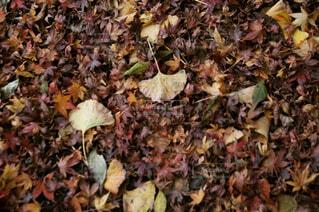 秋の写真・画像素材[1583366]