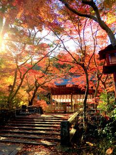 秋の鍬山神社の写真・画像素材[1640097]