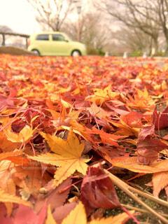 歩道の落ち葉の写真・画像素材[1657775]