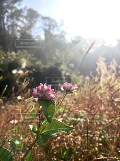 田舎の風景の写真・画像素材[1767664]