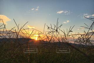 夕陽に光る草の写真・画像素材[1839154]
