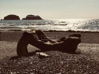 浜辺の腰掛けの写真・画像素材[1584911]