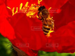 ミツバチの午後の写真・画像素材[1694495]