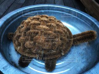 亀の子たわしで作った亀の写真・画像素材[1703638]