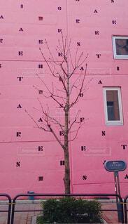 ピンクの上品の写真・画像素材[1847056]