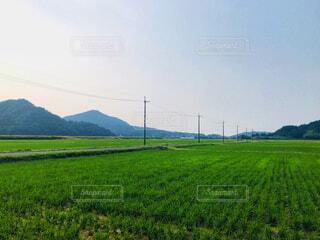 田の緑の写真・画像素材[2231054]