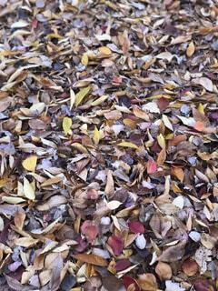 落ち葉の山の写真・画像素材[1586350]