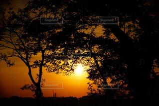 背景の夕日とツリーの写真・画像素材[1586975]