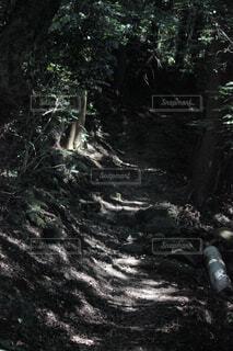 森林の写真・画像素材[1585145]