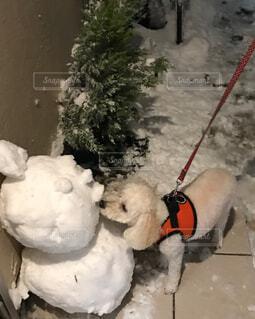 雪で覆われている犬の写真・画像素材[1586374]