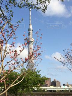 背の高いビルの前のツリーの写真・画像素材[1605365]
