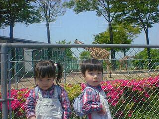 キリンと双子の写真・画像素材[1609480]