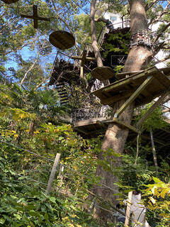 リゾナーレ熱海のツリーハウスの写真・画像素材[3923523]