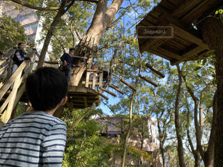リゾナーレ熱海のツリーハウスの写真・画像素材[3923522]