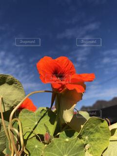 近くの花のアップの写真・画像素材[1591005]