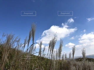 すすきと空の写真・画像素材[1592573]