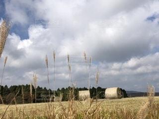 牧草ロールとすすきの写真・画像素材[1592583]
