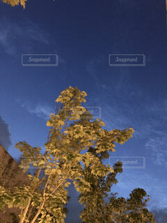 空と木の写真・画像素材[1591737]