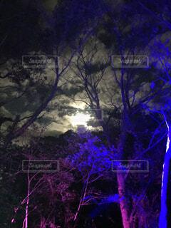 火の鳥ナイトウォークの写真・画像素材[1650280]