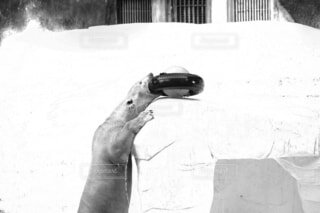 ホッキョクグマの写真・画像素材[1748329]