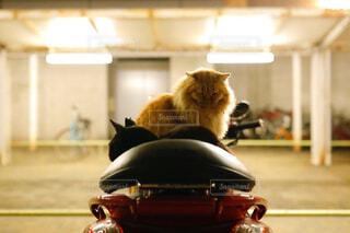 バイクの上に座るネコたちの写真・画像素材[1748336]