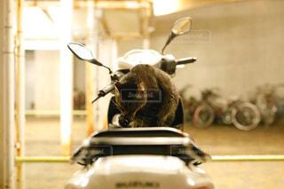バイクの上でくつろぐネコの写真・画像素材[1748337]
