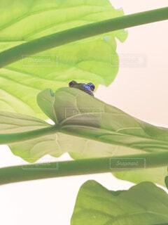 葉っぱの上からチラッの写真・画像素材[1592885]