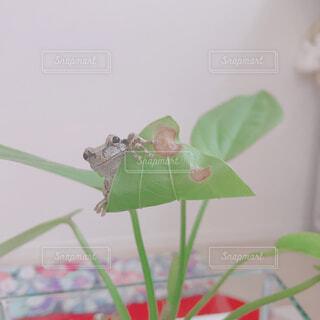 葉っぱからひょっこりの写真・画像素材[1593198]