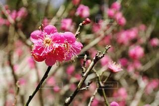 植物にピンクの花の写真・画像素材[1593418]