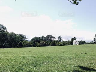 緑豊かな草原での写真・画像素材[1608292]