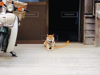 建物の前に座っている犬の写真・画像素材[1672407]
