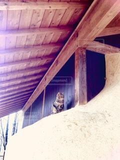 納屋にネコの写真・画像素材[1672420]