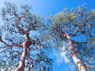 踊る木の写真・画像素材[1679297]