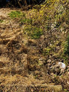 空き地にネコの写真・画像素材[1688902]