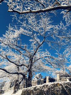 冬の朝の写真・画像素材[1706688]