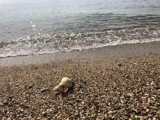 ビーチに玉ねぎの写真・画像素材[1610889]