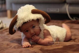 羊の服を着た赤ちゃんの写真・画像素材[1729436]