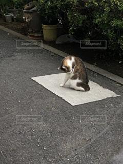 歩道に横たわる茶色と白い犬の写真・画像素材[2432188]