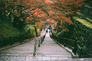 紅葉と京都の写真・画像素材[1671154]