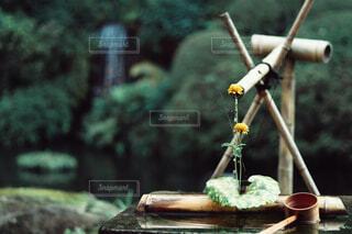日本庭園の写真・画像素材[1597536]