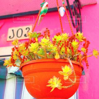 可愛いお家の可愛い植木鉢の写真・画像素材[1607387]