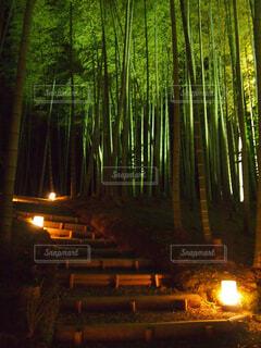 秋の竹林ライトアップの写真・画像素材[1627144]