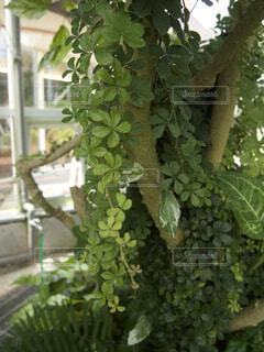 花みたいに可愛い植物の写真・画像素材[3160576]